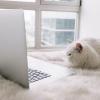 SEO – Melhorando a posição de uma clínica veterinária na busca orgânica do Google
