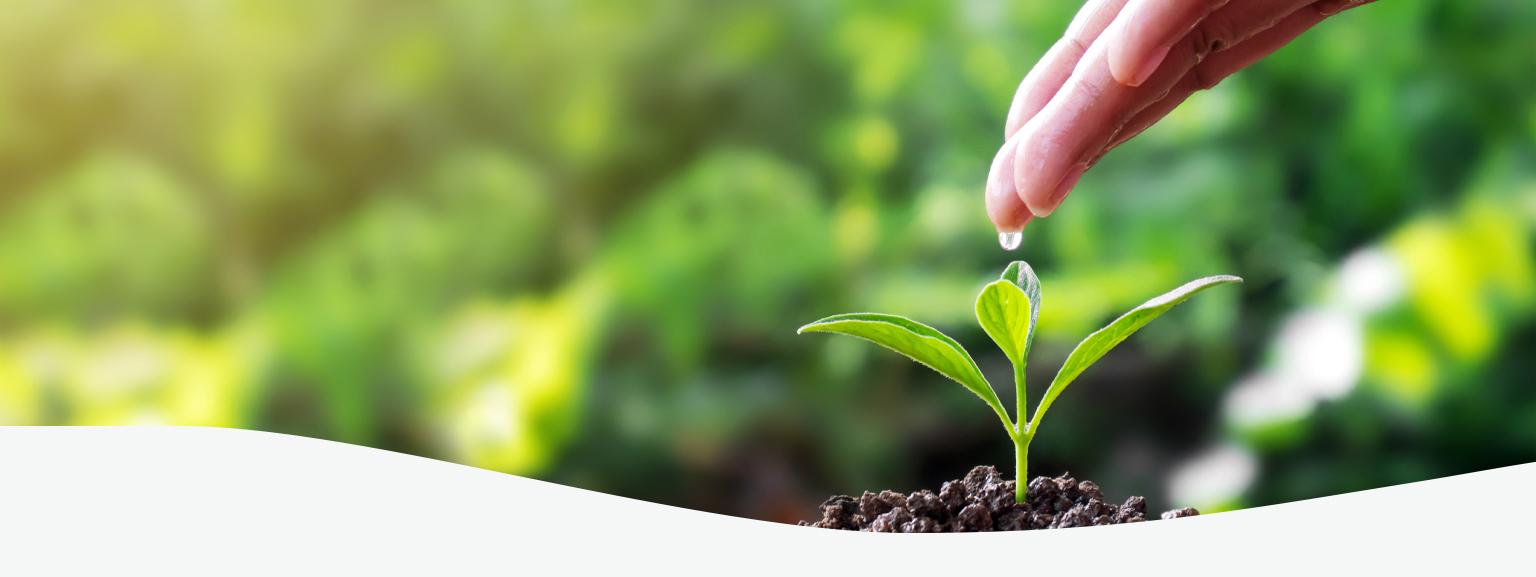 Branding para Commodities do Agro